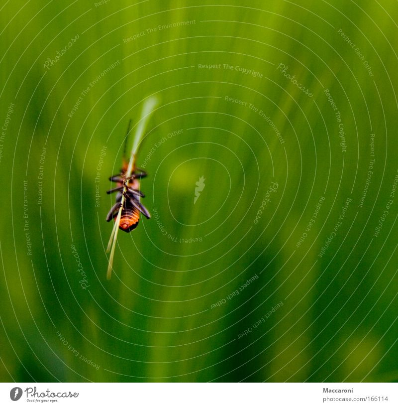 Nature Plant Green Animal Environment Meadow Grass Field Wild animal Hang Beetle Foliage plant Leg of a beetle