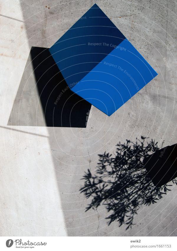 cube Art Work of art Sculpture Beautiful weather Pot plant Metal Sharp-edged Simple Under Blue Purity Idea Innovative Inspiration Arrangement Unclear Puzzle
