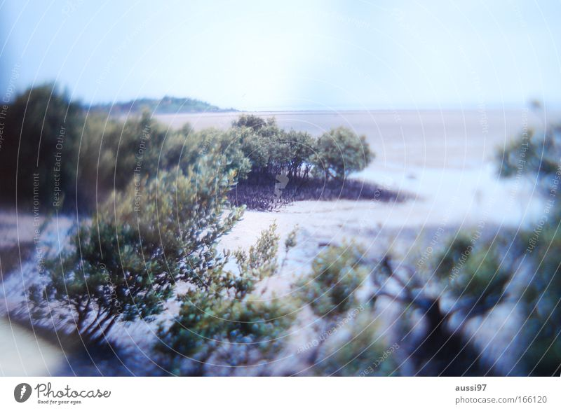 Nature Sky Plant Summer Life Sand Coast Environment Earth Climate change Bog Marsh Clump of trees