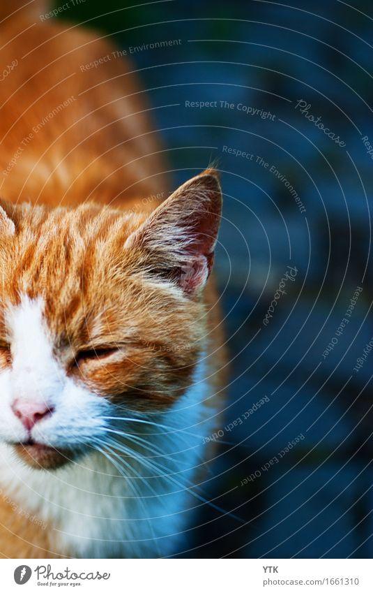 Mi-jau Animal Pet Cat 1 Emotions Joy Happy Happiness Contentment Joie de vivre (Vitality) Brave Determination Love of animals Arrogant Pride Esthetic Uniqueness