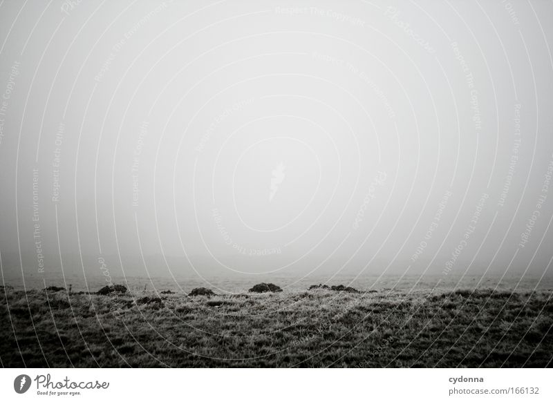 Sky Nature Calm Loneliness Far-off places Life Meadow Emotions Landscape Environment Grass Sadness Ice Field Horizon Fog