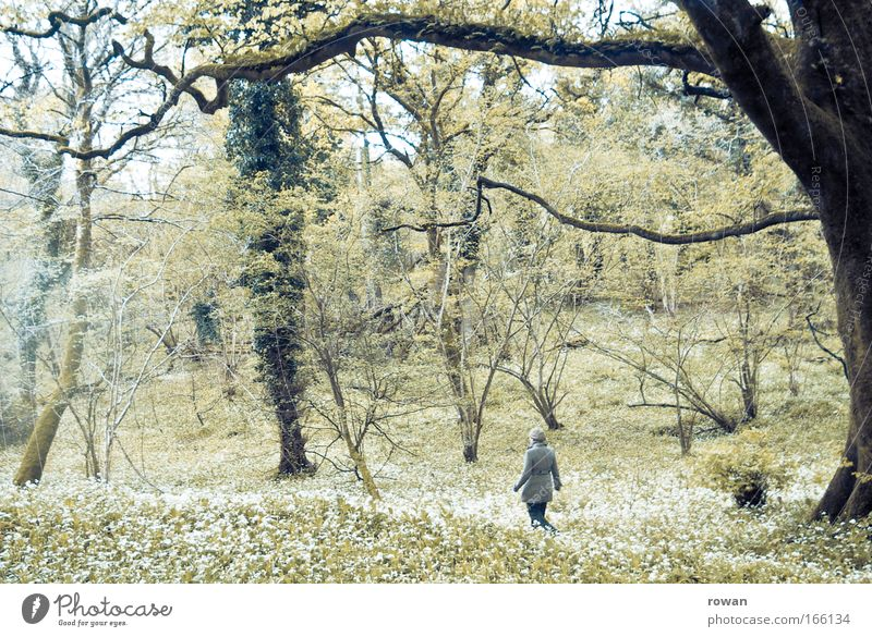 stroll Colour photo Subdued colour Day Rear view Woman Adults Dream Leisure and hobbies Ease Lanes & trails To go for a walk Going Hiking Forest Tree Loneliness
