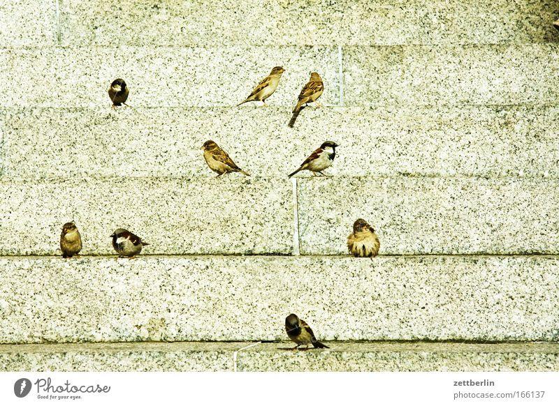 Spring Bird Stairs Sit Wait Level Sparrow Flock of birds Steps Animal Foraging