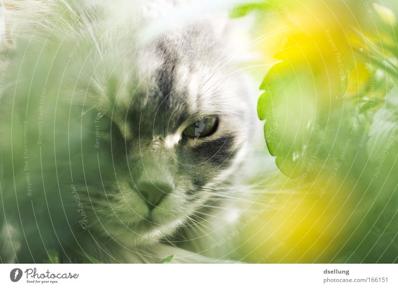 Nature Flower Green Plant Animal Yellow Blossom Spring Gray Cat Esthetic Animal face Clean Observe Balcony Looking