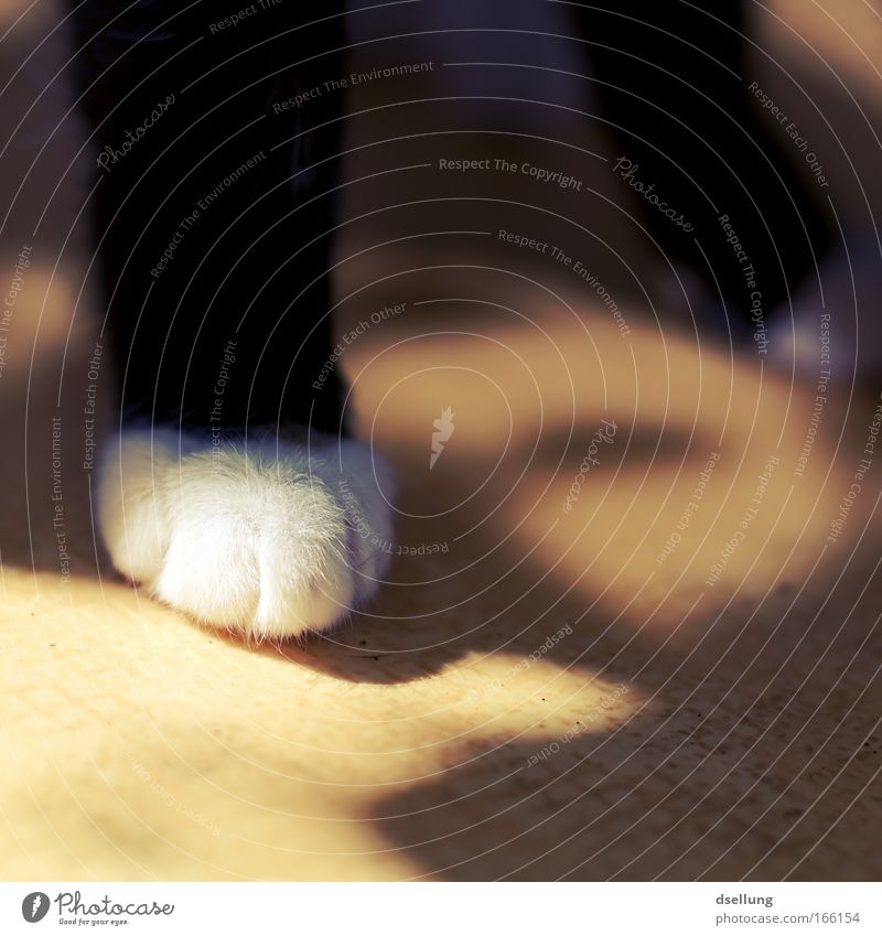 You can't stand on one leg... Colour photo Exterior shot Deserted Day Light Shadow Sunlight Shallow depth of field Pet Cat Paw 1 Animal Stand Firm