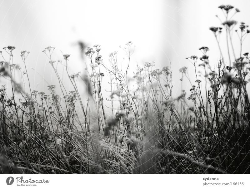 Nature Flower Plant Winter Loneliness Life Snow Emotions Death Grass Movement Dream Sadness Ice Fog Wind