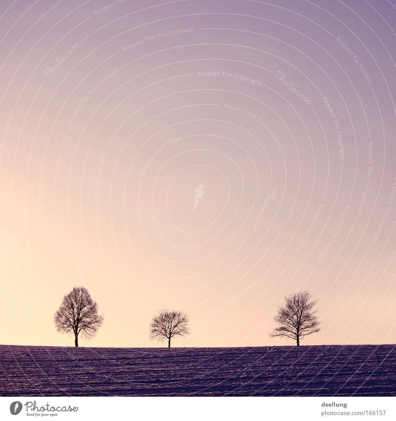 Nature Beautiful Tree Plant Winter Black Cold Landscape Pink Horizon Esthetic Romance Peace Violet Kitsch Idyll