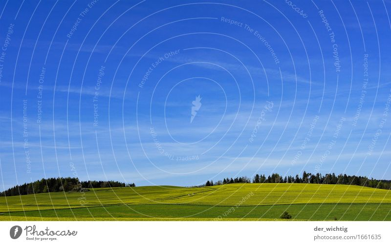 Rapeseed on a slope Cooking oil Agriculture Forestry Environment Nature Landscape Sky Horizon Sun Summer Beautiful weather Warmth Agricultural crop Field