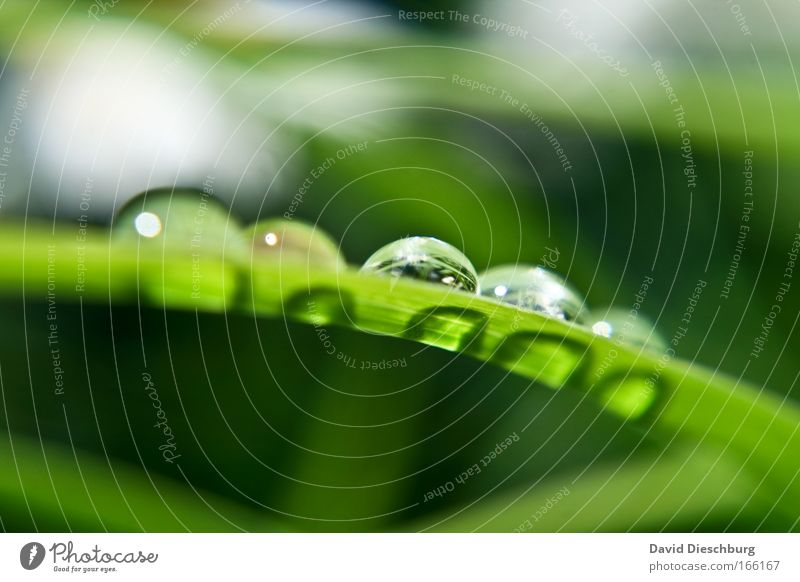Nature Plant Beautiful Green Summer Water Autumn Spring Grass Rain Glittering Weather Drops of water Wet Round Drop