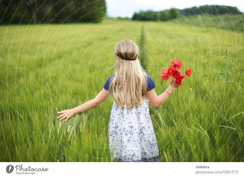 wander the field Human being Feminine Child Girl Infancy 1 3 - 8 years Environment Nature Spring Summer Beautiful weather Plant Flower Poppy Field Discover