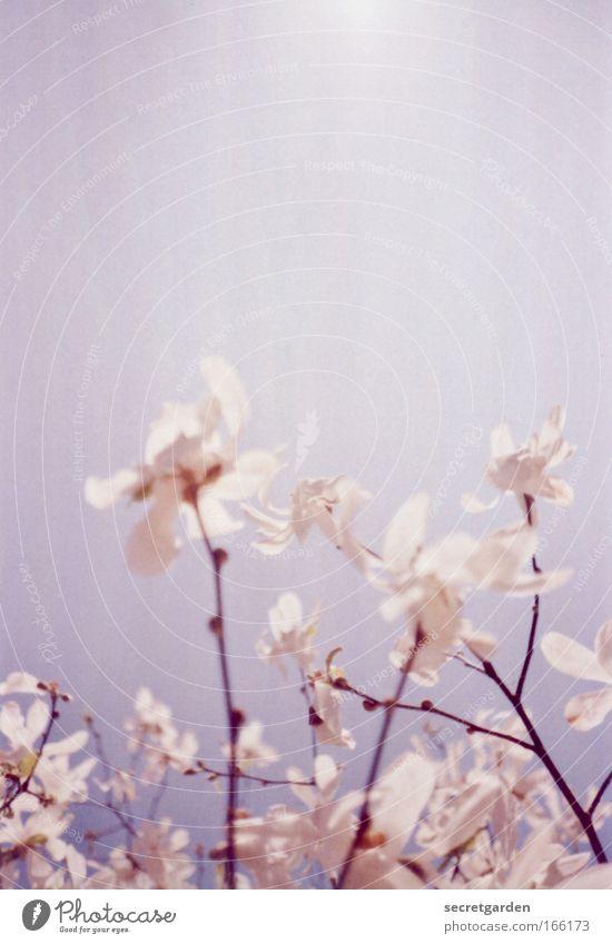 Nature Blue Beautiful Summer Warmth Spring Happy Dream Bright Park Pink Growth Esthetic Illuminate Morning Romance