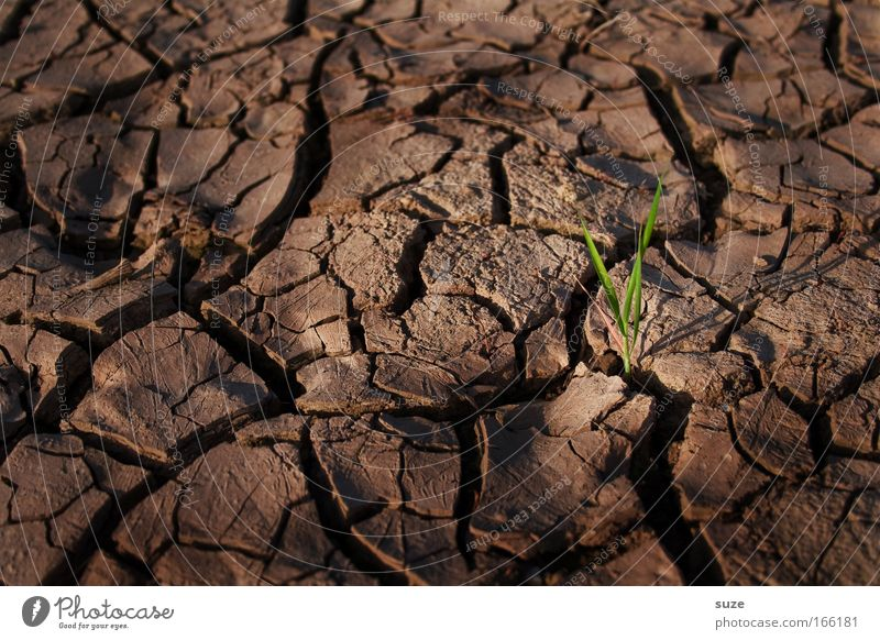 Nature Plant Loneliness Grass Landscape Brown Power Field Environment Success Earth Hope Growth Future Climate Desert