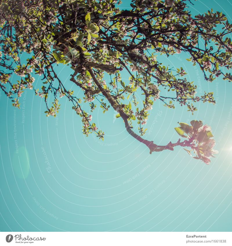 Sky Nature Blue Plant Green Sun Tree Leaf Blossom Spring Natural Garden Pink Blossoming Climate Branch