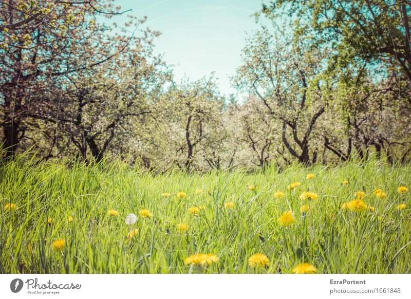 orchard meadow (sun) Nature Landscape Plant Sky Sun Spring Summer Tree Flower Grass Blossom Foliage plant Agricultural crop Wild plant Garden Meadow Natural