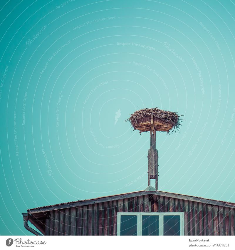 flown out Environment Nature Sky Cloudless sky Spring House (Residential Structure) Manmade structures Building Wall (barrier) Wall (building) Facade Window