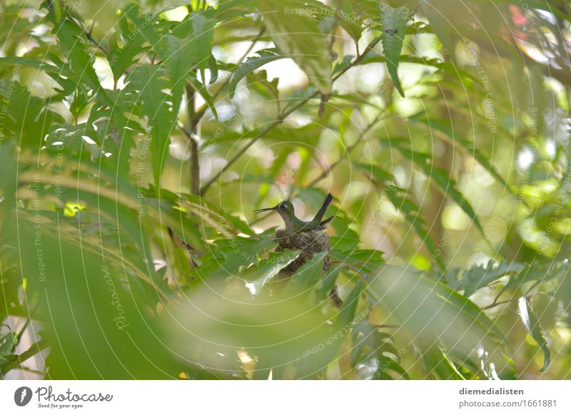 nest stool Animal Bird 1 Sit Wait Esthetic Exotic Small Green Timidity Discover Curiosity Environment Parental care Colour photo Exterior shot Deserted Day