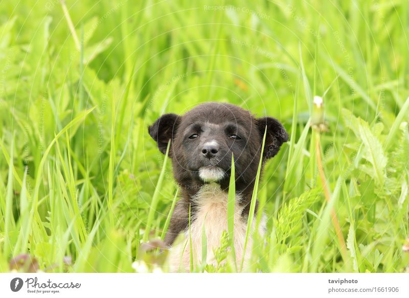 cute puppy in big grass Happy Beautiful Relaxation Summer Garden Baby Friendship Nature Animal Grass Meadow Fur coat Pet Dog Sit Stand Small Funny Cute Brown