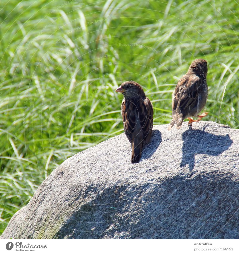 Nature Summer Animal Meadow Grass Movement Stone Brown Bird Pair of animals Going Sit In pairs Wing Observe Idyll