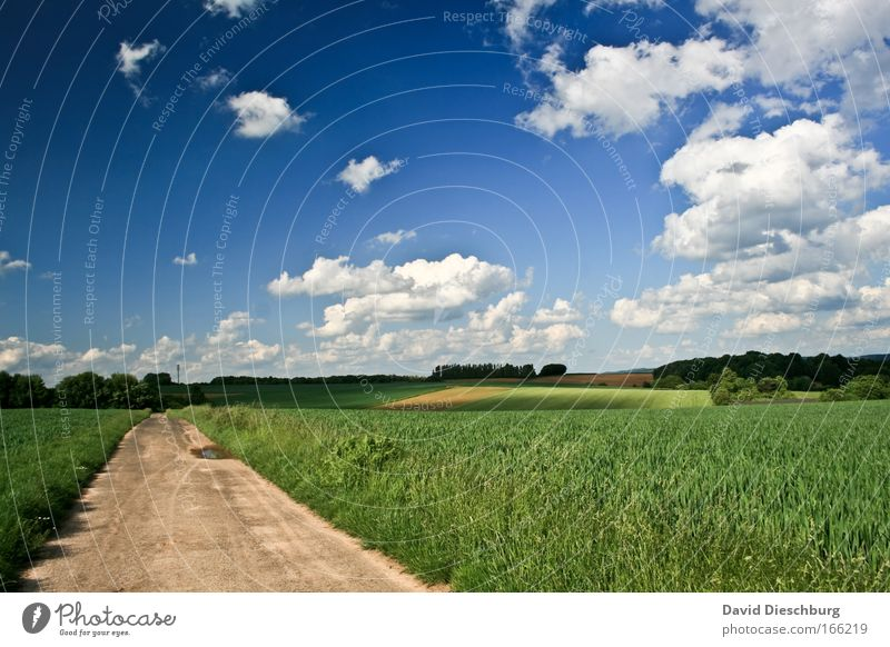Sky Nature Blue Green White Summer Plant Clouds Landscape Environment Spring Lanes & trails Horizon Field Earth Beautiful weather