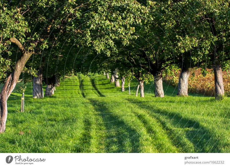 Grassy path through sunny avenue Street Lanes & trails Direction Avenue Tree Nature Environment Landscape Austria Beginning Career Forwards Rural Tracks