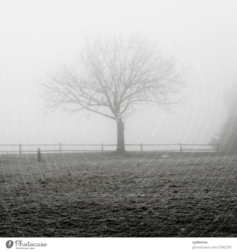 Nature Tree Winter Calm Life Meadow Emotions Grass Freedom Dream Sadness Landscape Ice Moody Field Fog