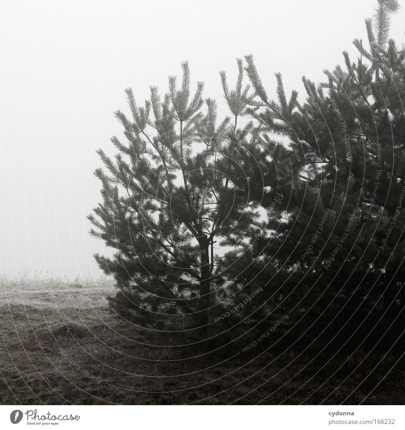 Nature Sky Tree Winter Calm Animal Life Meadow Emotions Death Sadness Ice Moody Fog Environment Time