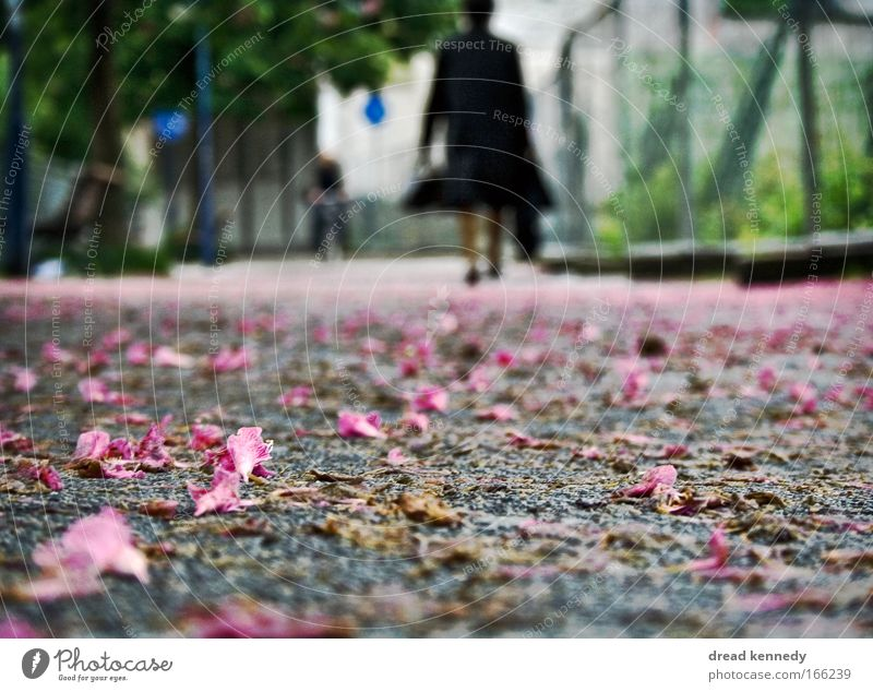 Human being Woman Blue City Green Tree Summer Flower Loneliness Adults Lanes & trails Movement Blossom Park Earth Work and employment
