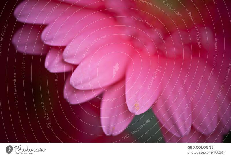 Nature Flower Plant Summer Blossom Spring Spring fever