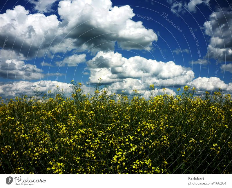 Nature Sky Plant Summer Clouds Dark Emotions Movement Spring Dream Landscape Field Hiking Wind Environment Large