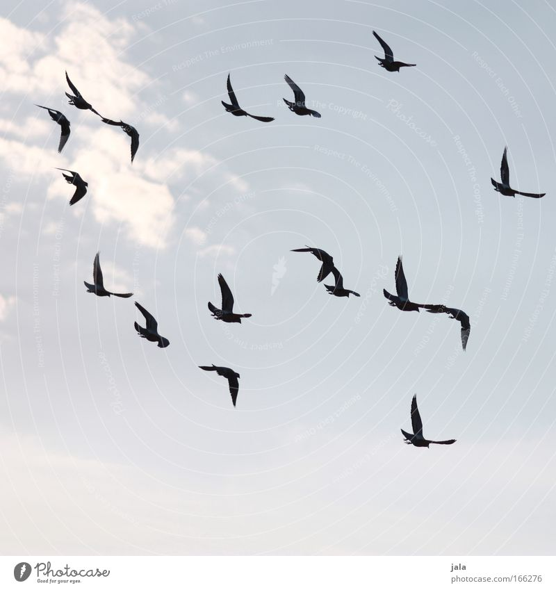 Sky Animal Bird Flying Group of animals Pigeon