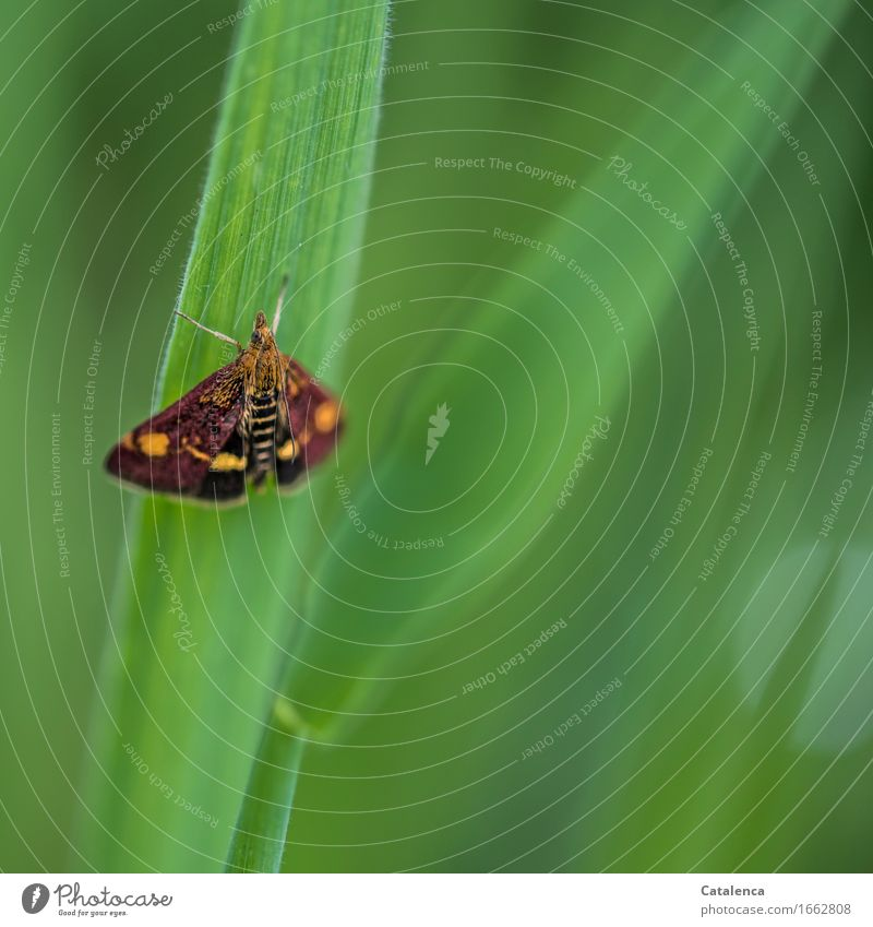 Little break Nature Grass Blade of grass Garden Animal Butterfly Insect Moth 1 Flying Wait Beautiful Brown Green Orange Contentment Stationary Relaxation