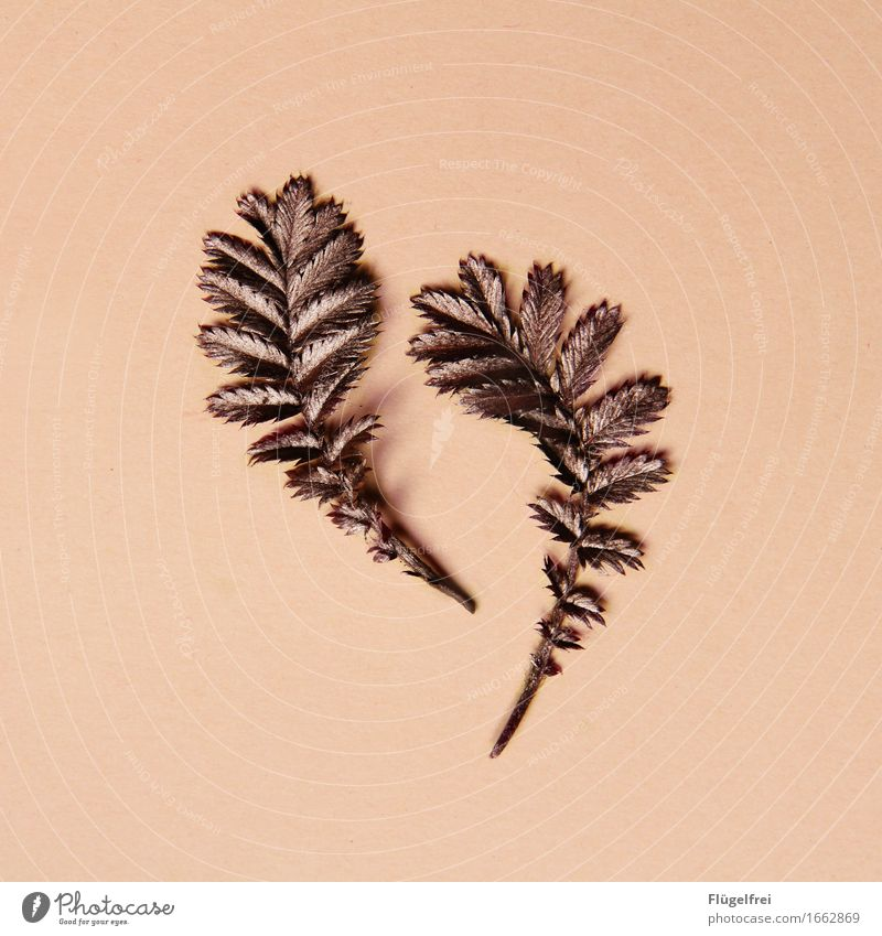 GROWING Nature Plant Kitsch Leaf Copper Growth Pink Noble 2 Round Colour photo Interior shot Copy Space left Copy Space right Copy Space top Copy Space bottom