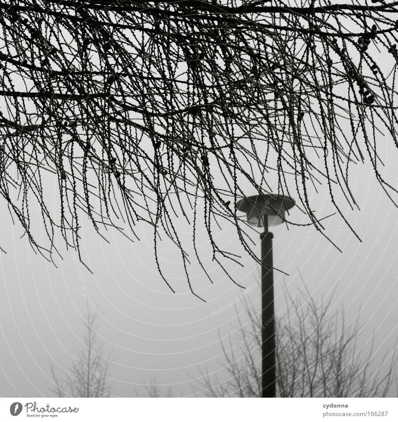 Nature Sky Tree Winter Calm Loneliness Life Cold Emotions Dream Sadness Moody Fog Weather Design Environment