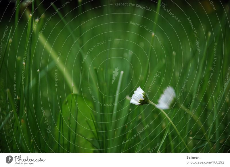 Nature Flower Plant Life Meadow Blossom Grass Freedom Contentment Simple Mysterious Fragrance Relationship Identity Spring fever Wild plant