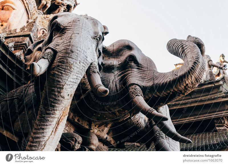 Elephant temple. Manmade structures Temple Tourist Attraction Wood Exceptional Trust Safety Protection Safety (feeling of) Sympathy Peaceful Dedication