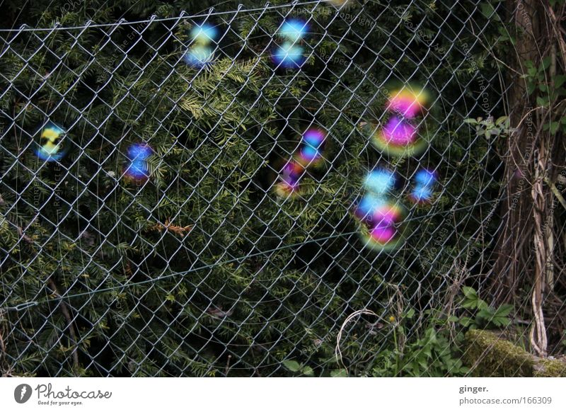 Soap Bubbles vs. Wire Mesh Fence Leisure and hobbies Playing Multicoloured Moody Ease Soap bubble Wire netting fence Plant Round Hover Dark green Stone