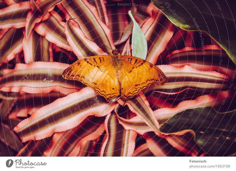 Nature Plant Animal Orange Butterfly Virgin forest Feeler Fern Unicoloured
