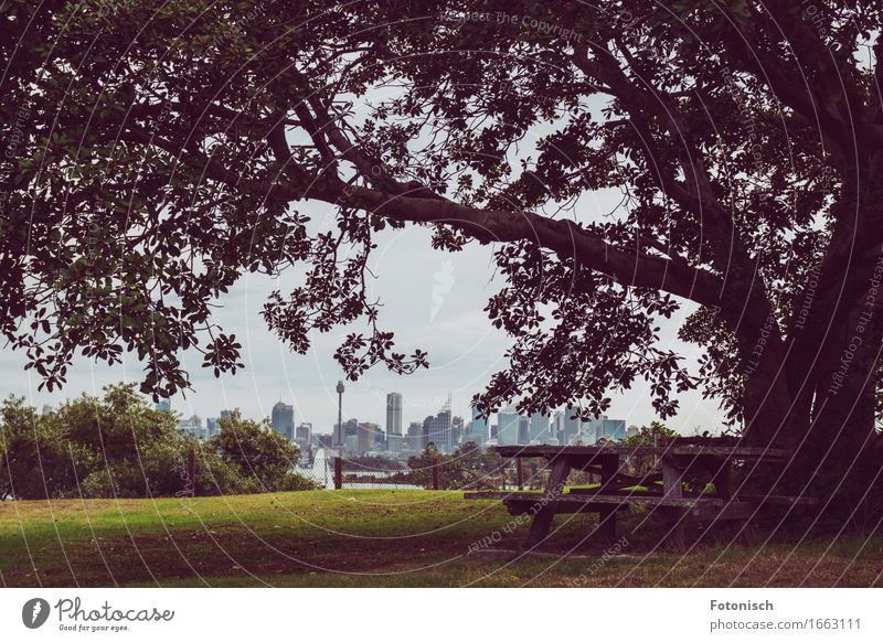 Picnic with a view of Sydney Tourism Trip City trip Camping Summer Nature Landscape Tree Park Australia Australia + Oceania Skyline Deserted High-rise Eating