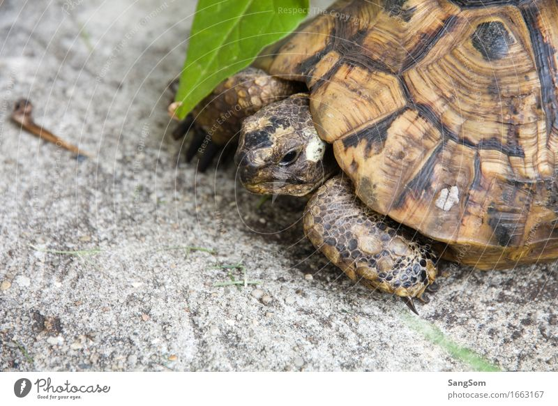 Nature Old Summer Leaf Animal Senior citizen Garden Uniqueness Serene Pet Animal face Slowly Love of animals Shell Turtle Tortoise-shell