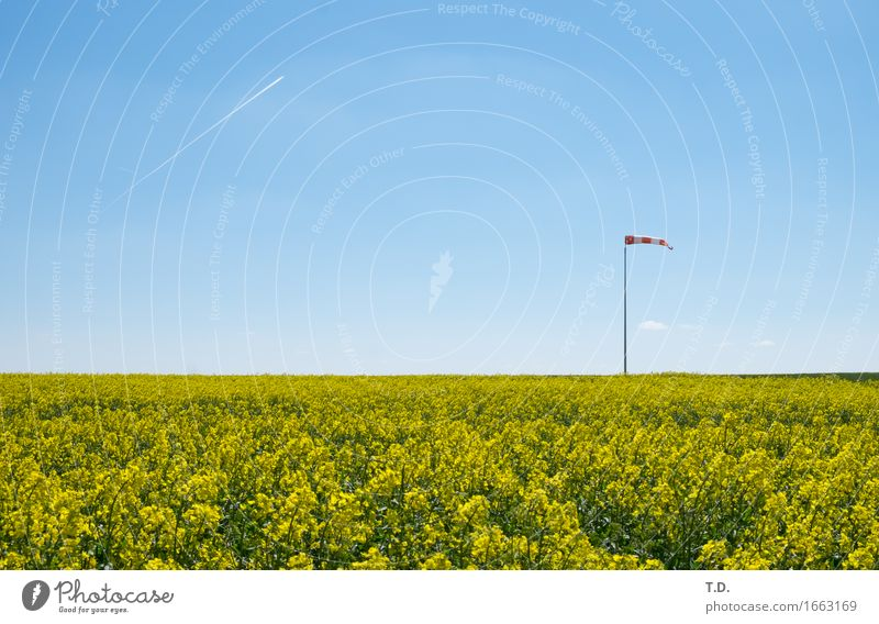 cream puffs Nature Landscape Air Sky Cloudless sky Spring Summer Beautiful weather Wind Agricultural crop Canola Field Airplane Vapor trail Windsock Observe