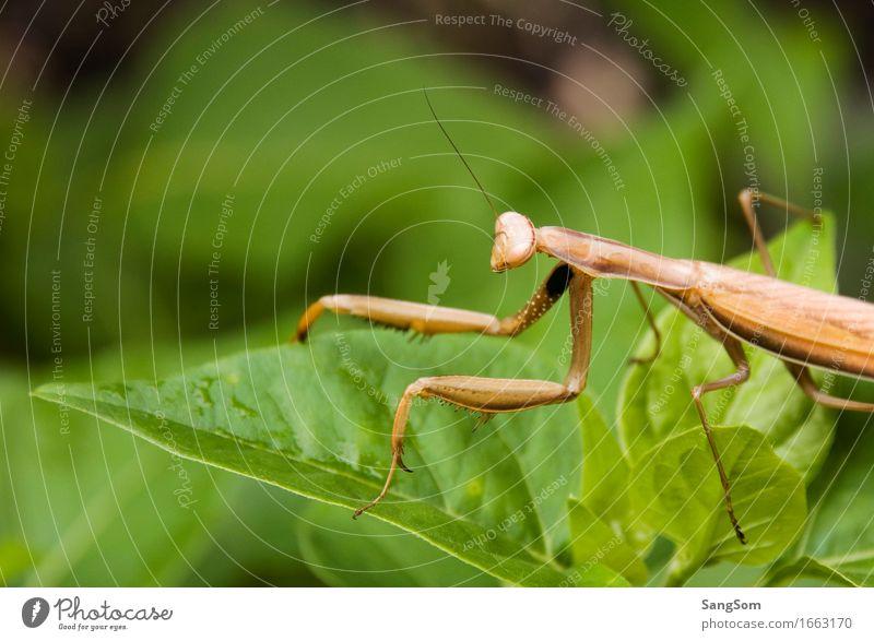 praying mantis Vacation & Travel Summer Environment Animal Spring Plant Bushes Leaf Foliage plant Garden Farm animal Wild animal Animal face Praying mantis 1