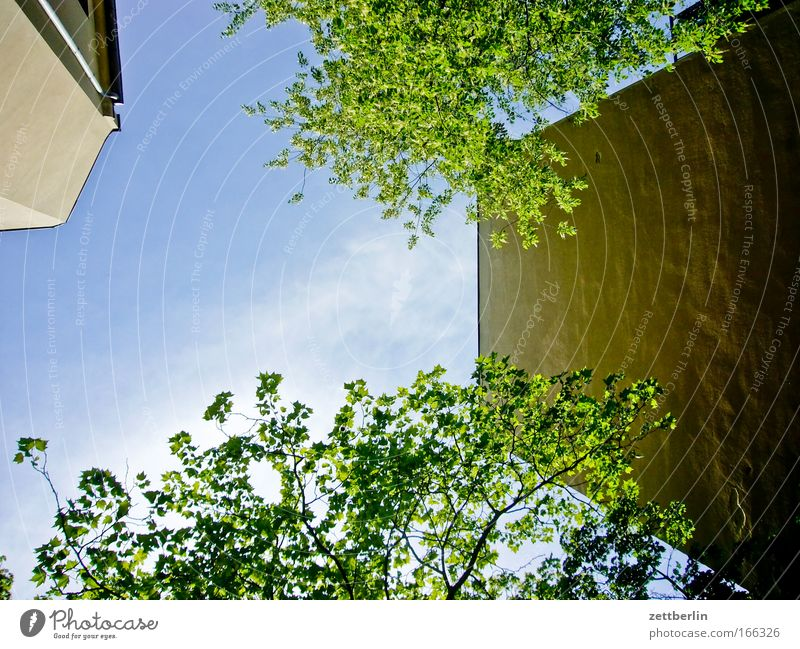 Sky Tree Green Plant Summer Leaf House (Residential Structure) Clouds Wall (barrier) Building Backyard Tenant Town house (City: Block of flats) Oxygen Landlord