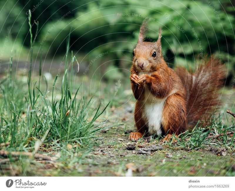 Nature Plant Animal Forest Environment Natural Grass Small Garden Park Wild animal Sit Bushes Cute Cuddly Squirrel