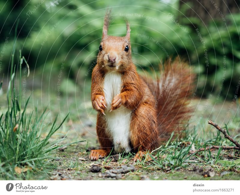 Nature Plant Animal Forest Environment Grass Small Garden Park Wild animal Cute Cuddly Squirrel Rodent