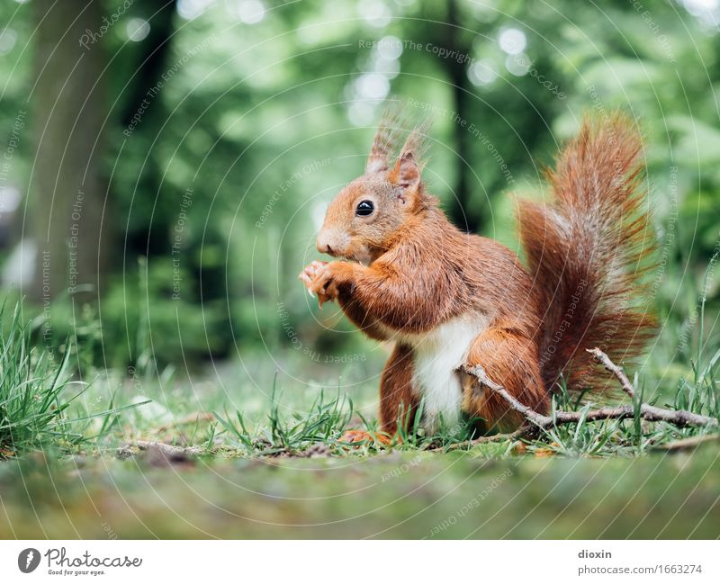 Nature Plant Tree Animal Forest Environment Natural Grass Small Park Wild animal Sit Cute Curiosity Cuddly Squirrel