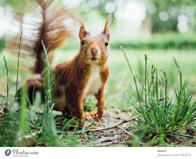 Got 8! Park Animal Wild animal Squirrel 1 Cuddly Small Natural Curiosity Cute Interest Nature Colour photo Exterior shot Close-up Deserted Copy Space right Day