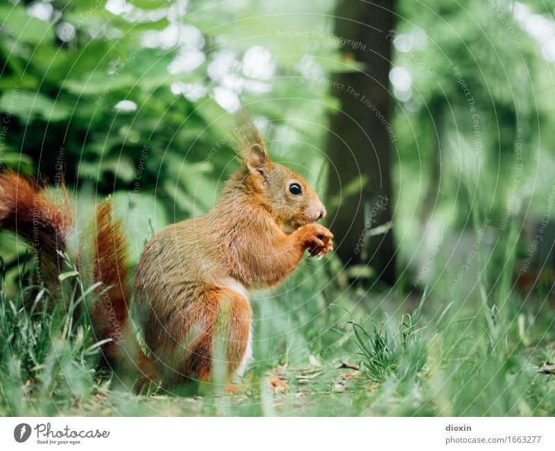 Nature Animal Environment Natural Meadow Small Garden Park Wild animal Sit Cuddly Rodent Squirrel Crouch