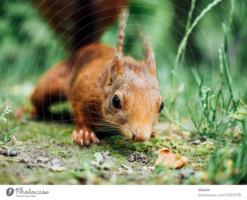 stay hungry! Grass Animal Wild animal Squirrel 1 Cuddly Natural Curiosity Cute Nature Colour photo Exterior shot Close-up Deserted Copy Space right