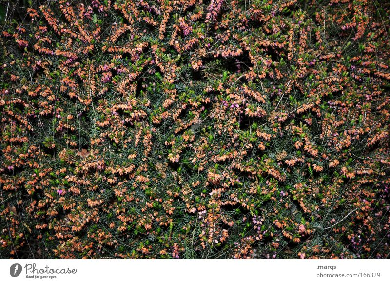 Nature Green Plant Red Summer Dark Blossom Spring Park Bushes Simple Uniqueness Exceptional Creepy Blossoming Illuminate