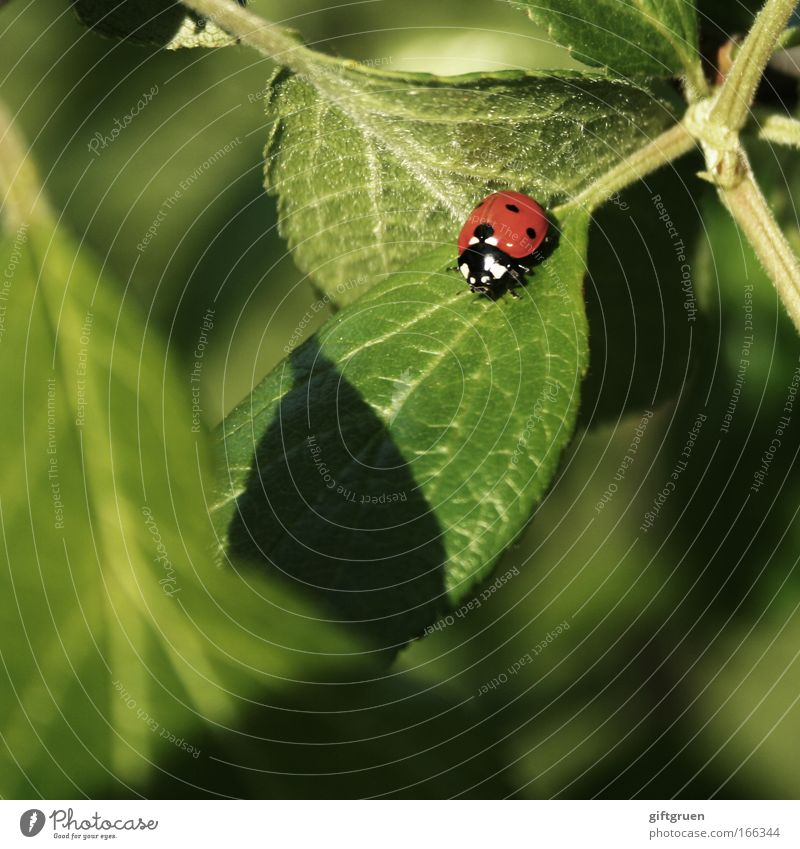 Nature Green Plant Red Summer Leaf Animal Spring Happy Small Environment Ladybird Beetle Crawl Good luck charm